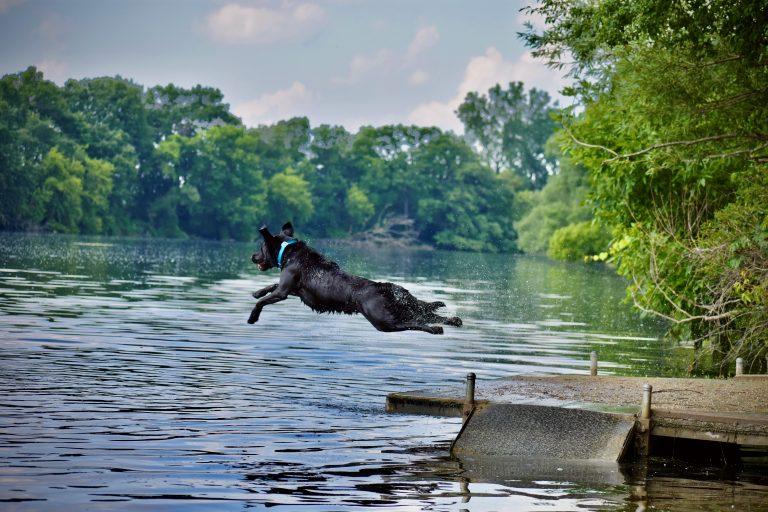What a Jump!